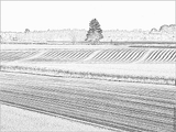 Imprimer le coloriage : Pomme de terre, numéro 56488
