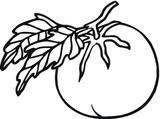 Imprimer le coloriage : Tomate, numéro 205162