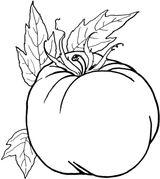 Imprimer le coloriage : Tomate, numéro 23e51c80