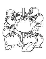Imprimer le coloriage : Tomate, numéro 26535
