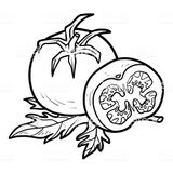 Imprimer le coloriage : Tomate, numéro 58996142