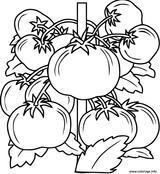 Imprimer le coloriage : Tomate, numéro f4285499