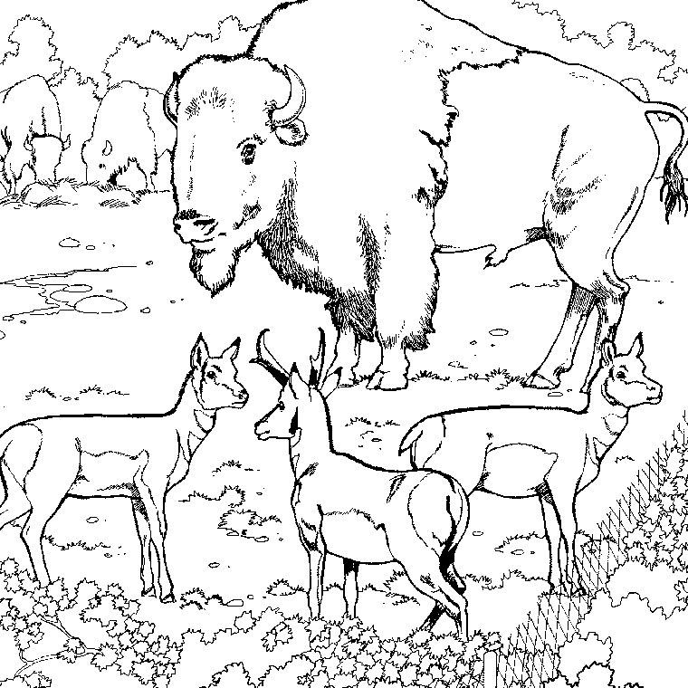 Coloriages A Imprimer Animaux Carnivores Numero 25729