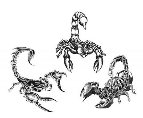 Coloriages à imprimer : Scorpion, numéro : 237338