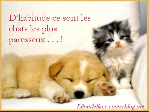 Coloriage De Chat Et Chien Mignon.Dessins En Couleurs A Imprimer Chien Numero 357672