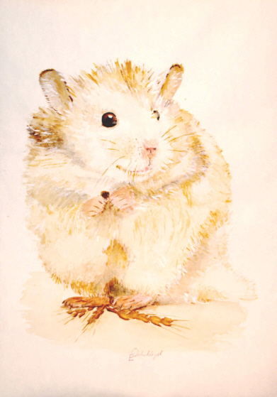 Dessins en couleurs à imprimer : Hamster, numéro : 117845