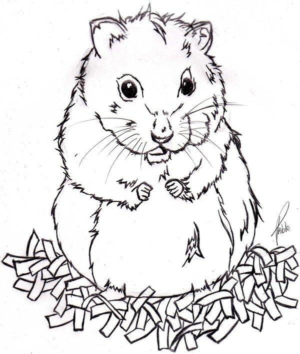 Dessins en couleurs à imprimer : Hamster, numéro : 19524