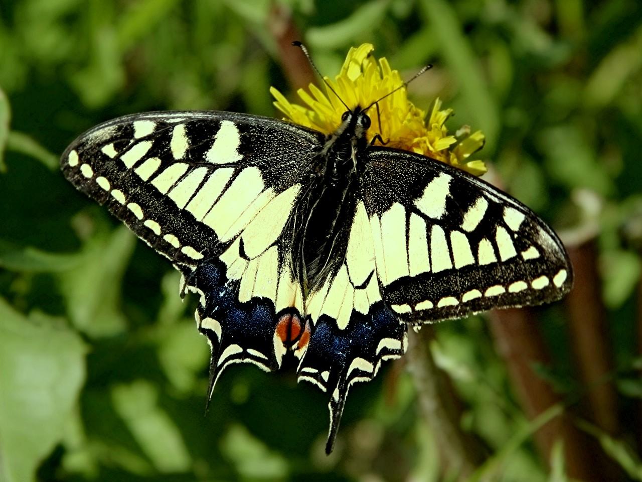 Dessins en couleurs à imprimer : Insectes, numéro : 684408