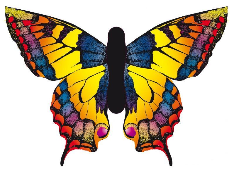 Dessins en couleurs à imprimer : Papillon, numéro : 301203
