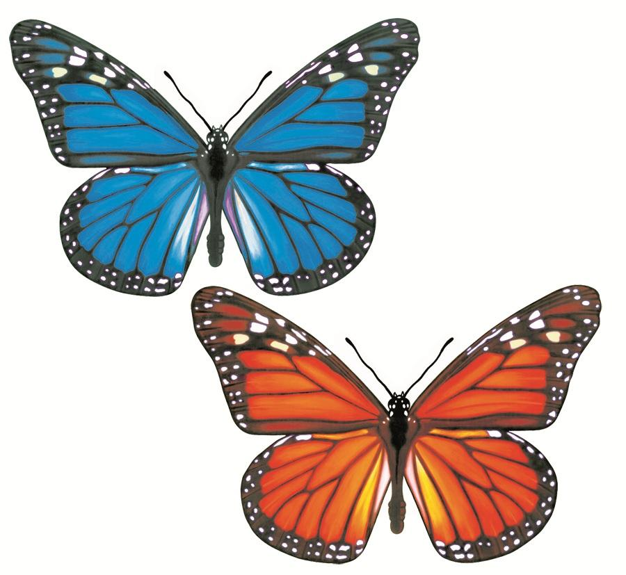 Dessins en couleurs à imprimer : Papillon, numéro : 630093