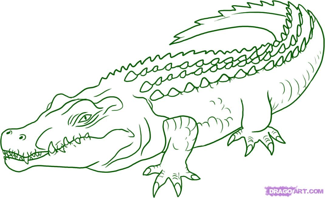 Dessins En Couleurs A Imprimer Crocodile Numero 22702