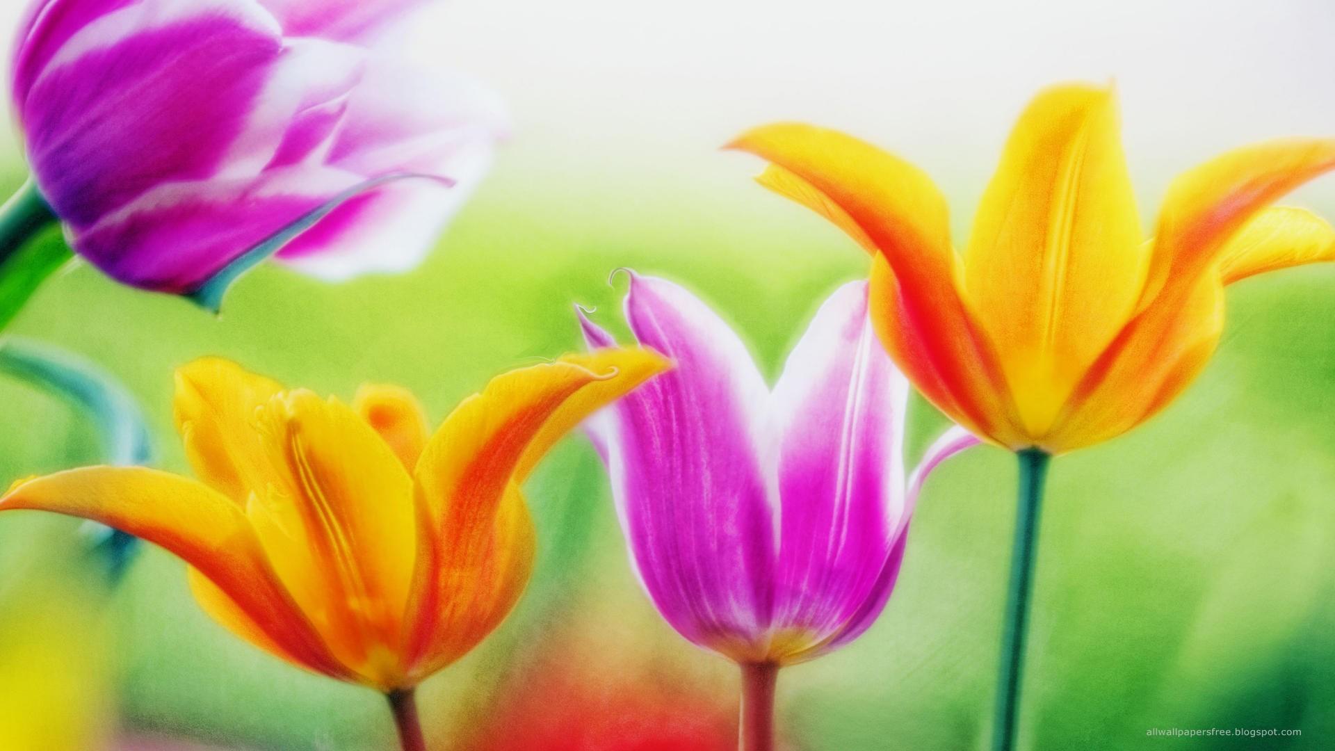 Dessins En Couleurs à Imprimer Fleurs Numéro 19687