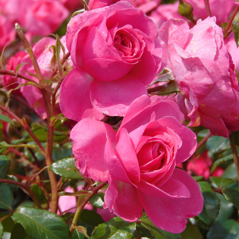 Dessins En Couleurs à Imprimer Fleurs Numéro 1ac89abd