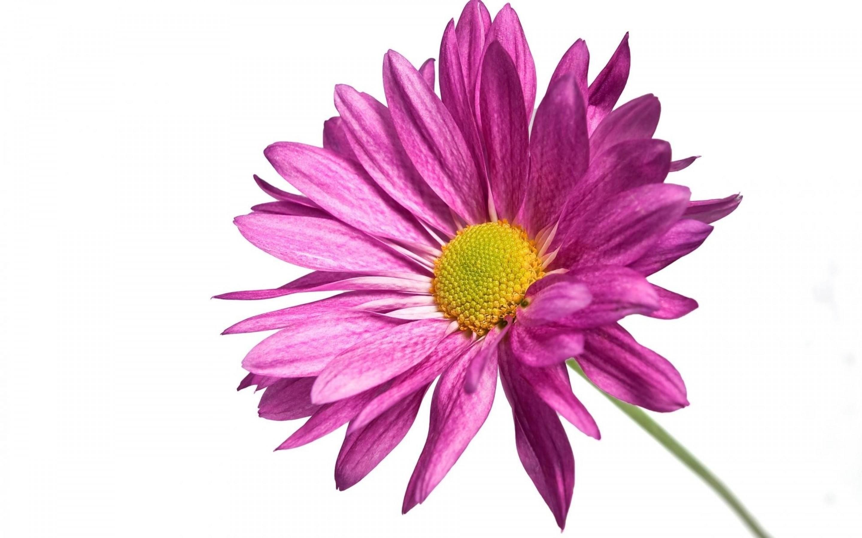 Dessins En Couleurs à Imprimer Fleurs Numéro 621733