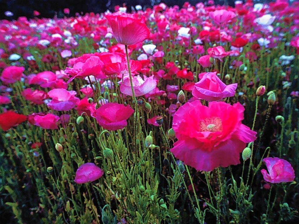 Dessins En Couleurs A Imprimer Fleurs Numero 683502