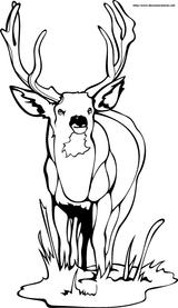 Imprimer le coloriage : Animaux, numéro 127715