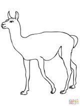 Imprimer le coloriage : Animaux carnivores, numéro 115243d7