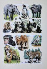 Imprimer le dessin en couleurs : Animaux carnivores, numéro 119576