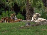 Imprimer le dessin en couleurs : Animaux carnivores, numéro 119581