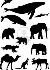 Imprimer le coloriage : Animaux carnivores, numéro 147163