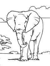Imprimer le coloriage : Animaux carnivores, numéro 147167