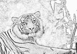 Imprimer le coloriage : Animaux carnivores, numéro 147171