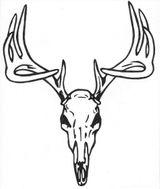 Imprimer le coloriage : Animaux carnivores, numéro 15380e25