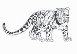 Imprimer le coloriage : Animaux carnivores, numéro 167670