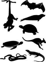 Imprimer le coloriage : Animaux carnivores, numéro 175450
