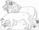 Imprimer le coloriage : Animaux carnivores, numéro 212810