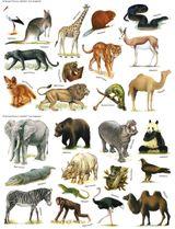 Imprimer le dessin en couleurs : Animaux carnivores, numéro 22578