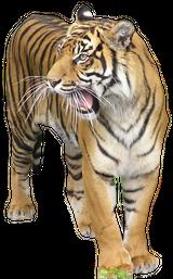 Imprimer le dessin en couleurs : Animaux carnivores, numéro 22588