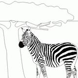 Imprimer le dessin en couleurs : Animaux carnivores, numéro 22590