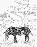 Imprimer le coloriage : Animaux carnivores, numéro 23887