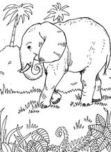 Imprimer le coloriage : Animaux carnivores, numéro 23898