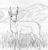 Imprimer le coloriage : Animaux carnivores, numéro 23900