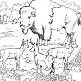 Imprimer le coloriage : Animaux carnivores, numéro 25729