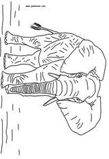 Imprimer le coloriage : Animaux carnivores, numéro 25735