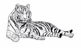 Imprimer le coloriage : Animaux carnivores, numéro 26488