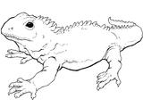 Imprimer le coloriage : Animaux carnivores, numéro 310434