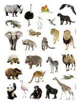 Imprimer le dessin en couleurs : Animaux carnivores, numéro 379519