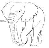 Imprimer le coloriage : Animaux carnivores, numéro 542298
