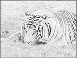 Imprimer le coloriage : Animaux carnivores, numéro 64669