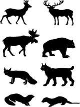 Imprimer le coloriage : Animaux carnivores, numéro 64686