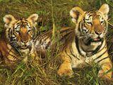 Imprimer le dessin en couleurs : Animaux carnivores, numéro 692829