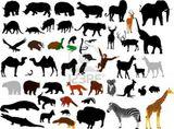 Imprimer le dessin en couleurs : Animaux carnivores, numéro 74072