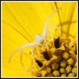 Imprimer le dessin en couleurs : Arachnides, numéro 119801