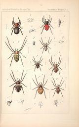 Imprimer le dessin en couleurs : Arachnides, numéro 158587