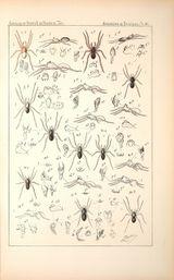 Imprimer le dessin en couleurs : Arachnides, numéro 158590