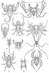 Imprimer le coloriage : Arachnides, numéro 195833